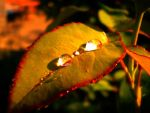 Leaf by smudlinka66