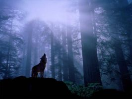 Lone Howling Wolf by emonate15