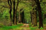 On the spring lane again by jchanders