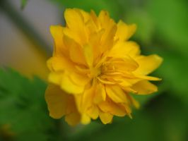 Yellow flower by MagicoffMusic