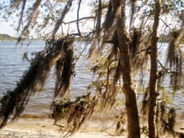 National Park Hanging Moss On Beach by MOGGGET