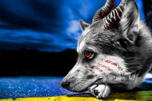 Infected Husky by TMProjection