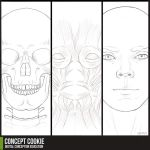Anatomy Resource: Head by ConceptCookie