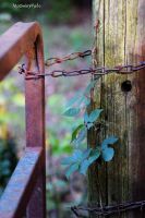 Chained Gate by McOwenPhoto