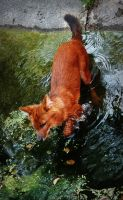 Dhole by MisanthropicBastard
