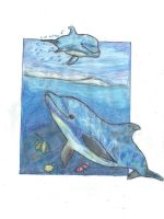 Dolphins by anatglo100
