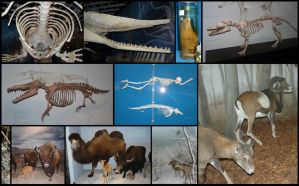 Compilation: LWL Museum of Natural History #2 by CabinetCuriosities