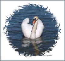 Mute swan framed by Sipramiili
