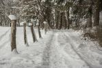 Snowy forest. by Mark-Heather