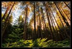 Trees Light by Marcello-Paoli
