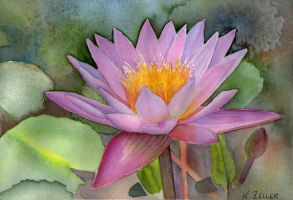 Waterlilly by karincharlotte