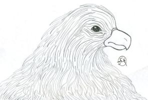 Old drawing of an eagle by midniteoil