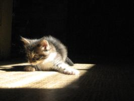 seriousness in infancy by windily