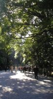 Meiji Jingu Shrine Entrance by Wild-Neko