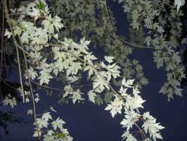 White Leaves 1 by Crystelly