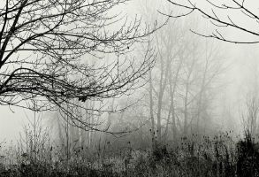 These woods of dread and fear... by thewolfcreek