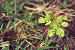 Planting hope by marialivia16