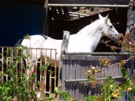 Caballo blanco 2 by ToniTeror