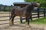 dark bay sabino irish cob scratching tail by slime-stock