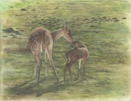Doe and Fawn by onlycomeoutatnight