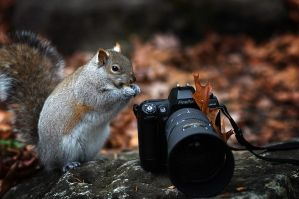 The fluffy photographer....... by YuriBonder