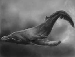 Whale Sketch by Freeglader
