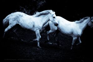 Spirit Horses by causticxace
