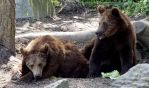 Brother Bear by Olessa
