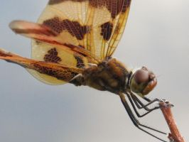 Halloween Pennant 4a by Windthin
