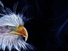 Bald Eagle Fractal by PimArt