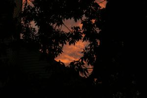 Sunset and trees 1 by waterweed-stock