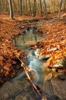 Little Creek by Pavel-Poslusny