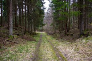 Forest Road II - Stock Photo by KarvinenStock