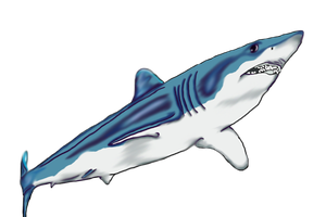 Shortfin Mako - Complete by FlyingFox-Bat
