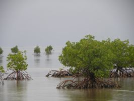 Fiji: Mangroves Out To Sea by TheLittleGhostie