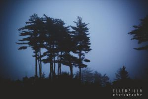 foggy trees by ellenzilla