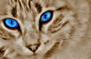miss blue eyes by lakecarole