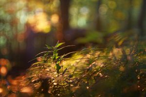 in the wood by AdrianaKH-75