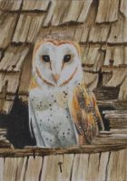 Barn Owl and the Roof ACEO by waughtercolors