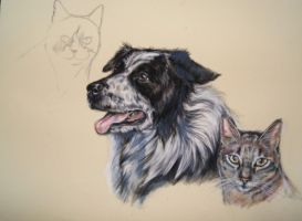 In progress, border collie and two cats by Jniq