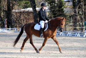 Dressage compet 31.01.2010 by Nanook94