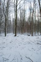 Snowscape Stock 56 by Sed-rah-Stock