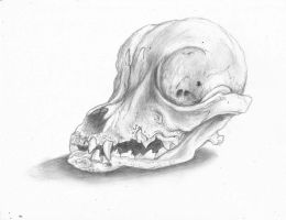 Animal Skull practice! by ZombieWil