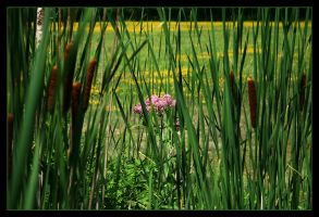 Edge of the bog - July 2008 by pearwood