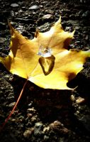Diamond on a leaf 2 by RLPhotographs