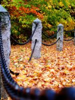 Autumn Fence by dementeddiva23