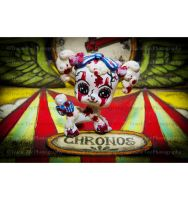 Circus Time by tracieteephotography