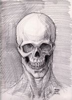 Skull Sketch 6-8-2013 by myconius