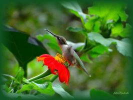 Hummingbird........ by gintautegitte69