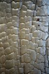 Bacon36 by jojo22